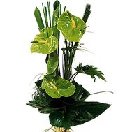 """Bouquet of green anthuriums"" in the online flower shop df.ua"