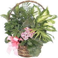 Flowers in a pot as a gift to a woman - flowers and bouquets on df.ua