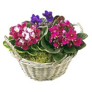 Flowers in the basket inexpensive - flowers and bouquets on df.ua