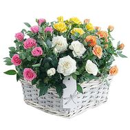 Composition of cluster roses in pots in a basket - flowers and bouquets on df.ua