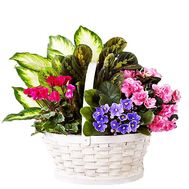Basket with indoor plants - flowers and bouquets on df.ua