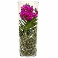Орхідея Ванда в скляній колбі - цветы и букеты на df.ua