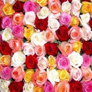 Multicolored roses per piece - flowers and bouquets on df.ua