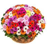 Large basket of flowers with gerberas - flowers and bouquets on df.ua