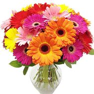 Bouquet of 25 gerberas - flowers and bouquets on df.ua