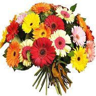 Bouquet of 55 gerberas for the anniversary of 55 years - flowers and bouquets on df.ua