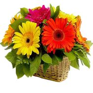 Bouquet of gerberas in a basket - flowers and bouquets on df.ua