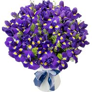 Bouquet of iris to buy - flowers and bouquets on df.ua