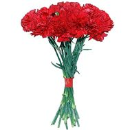Bouquet of red carnations - flowers and bouquets on df.ua