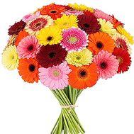 Букет разноцветных гербер - цветы и букеты на df.ua