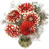 Dahlias to buy - flowers and bouquets on df.ua
