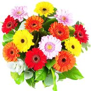 Gerberas to buy - flowers and bouquets on df.ua