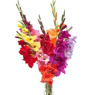 gladioli bouquet - flowers and bouquets on df.ua