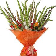 Gladioli to buy - flowers and bouquets on df.ua