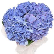Hydrangea bouquet - flowers and bouquets on df.ua