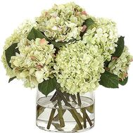 Hydrangea to buy - flowers and bouquets on df.ua