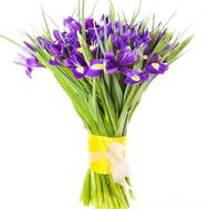 Irises for the beloved - flowers and bouquets on df.ua