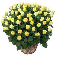 Корзина 135 желтых роз - цветы и букеты на df.ua