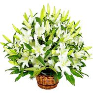 """Basket of white lilies"" in the online flower shop df.ua"