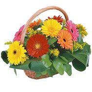 Basket of flowers from multi-colored gerberas - flowers and bouquets on df.ua