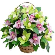 Basket of 25 orchids - flowers and bouquets on df.ua