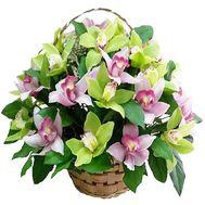 Корзина из 25 орхидей - цветы и букеты на df.ua