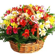 Basket of alstroemerias - flowers and bouquets on df.ua
