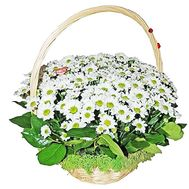Basket with flowers for the wedding - flowers and bouquets on df.ua