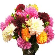 Beautiful bouquet of dahlias - flowers and bouquets on df.ua
