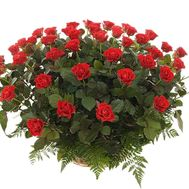 Red roses in a basket for a girl - flowers and bouquets on df.ua