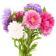Bouquet of aster - flowers and bouquets on df.ua