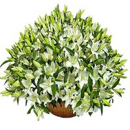 """A huge basket of lilies"" in the online flower shop df.ua"