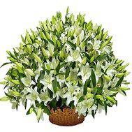 """Huge basket of lilies"" in the online flower shop df.ua"