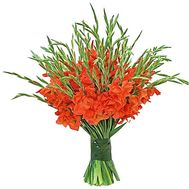 A huge bouquet of gladiolus - flowers and bouquets on df.ua