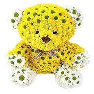 Желтый мишка из хризантем - цветы и букеты на df.ua