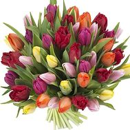 51 tulip - flowers and bouquets on df.ua