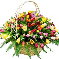 Large basket of 201 tulips - flowers and bouquets on df.ua