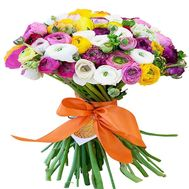 Large bouquet of ranunculus - flowers and bouquets on df.ua