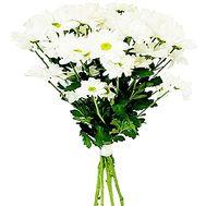 Букет білих ромашок - цветы и букеты на df.ua