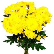 """""""Bouquet of 5 chrysanthemums"""" in the online flower shop df.ua"""