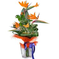 Bouquet of exotic:strelitzia - flowers and bouquets on df.ua