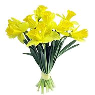 Bouquet of daffodils - flowers and bouquets on df.ua