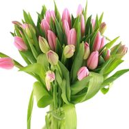 Bouquet of pink tulips - flowers and bouquets on df.ua