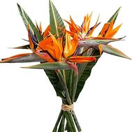 Bouquet of Strelitzia - flowers and bouquets on df.ua