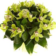 Bouquet of green orchids - flowers and bouquets on df.ua