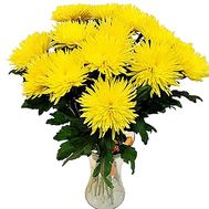 Chrysanthemums large bouquet - flowers and bouquets on df.ua