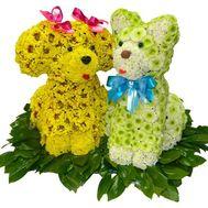 Кот и собака из цветов - цветы и букеты на df.ua