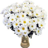 Купить ромашки с доставкой - цветы и букеты на df.ua