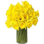 Daffodils to buy - flowers and bouquets on df.ua