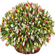 Huge basket of tulips - 301 tulip - flowers and bouquets on df.ua